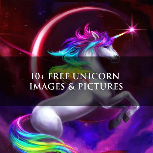10+ Free Unicorn Images & Pictures [HD] - Untitled 1 6 490x490