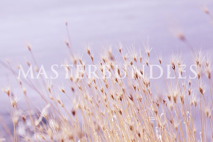 10 Free Pastel Background Images: Download HD Backgrounds - sharon mccutcheon 52zFIZDsfAE unsplash