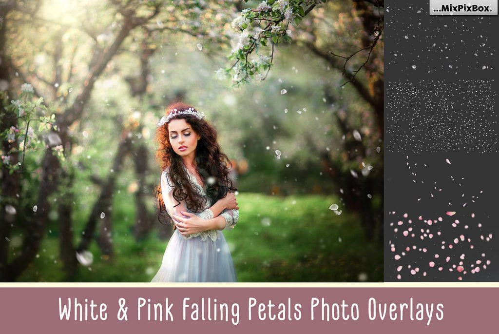 White and Pink Petals Photo Overlays - $8 - cover