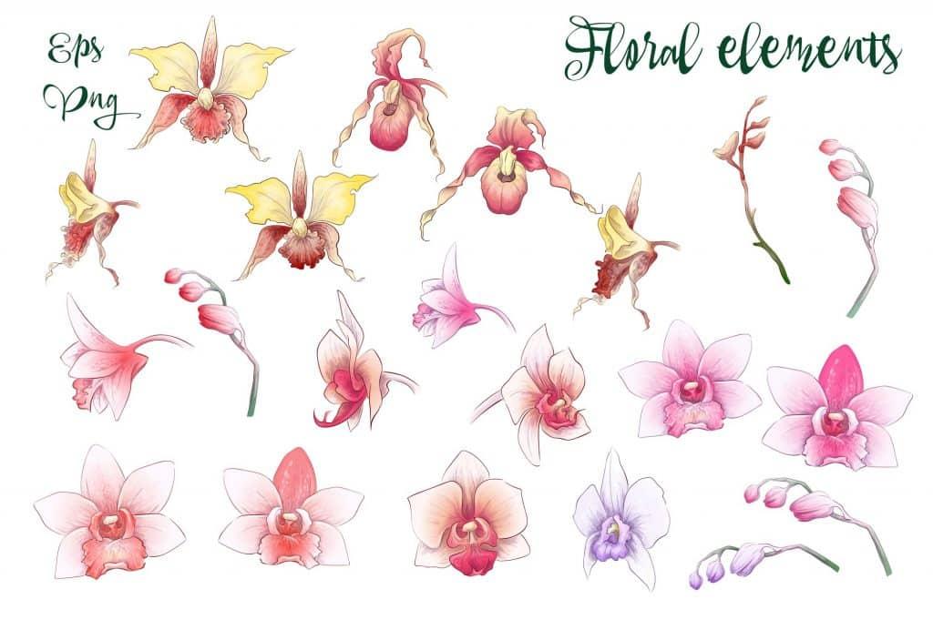 Orchids Vector Clip Art - $14 - 7 8