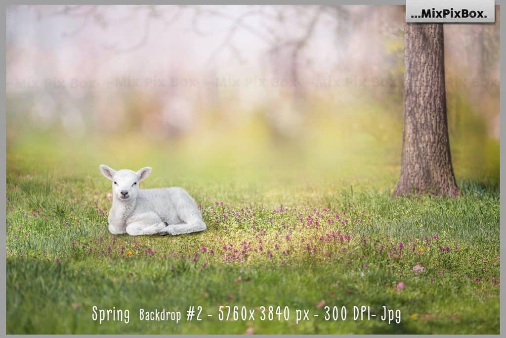 Spring Easter Animals & Background - $9 - 3 1 1