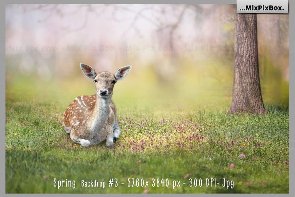 Spring Easter Animals & Background - $9 - 4 1 2