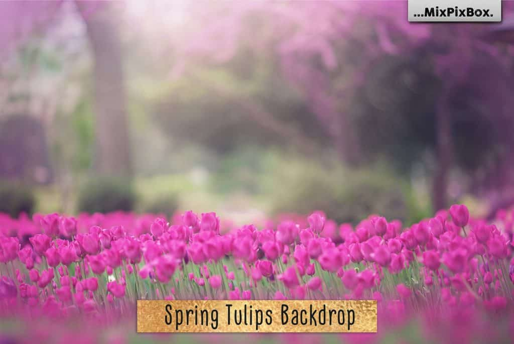 Spring Tulips Backdrop Photoshop Add-Ons - $9 - sprin tulips first image