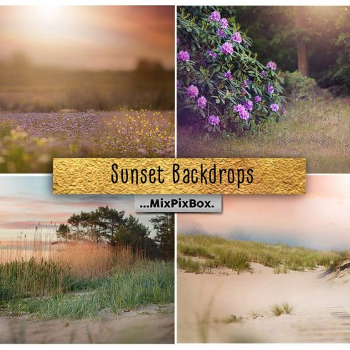 Sunset Backdrops: High Resolution, 300 DPI - 600 25 490x490