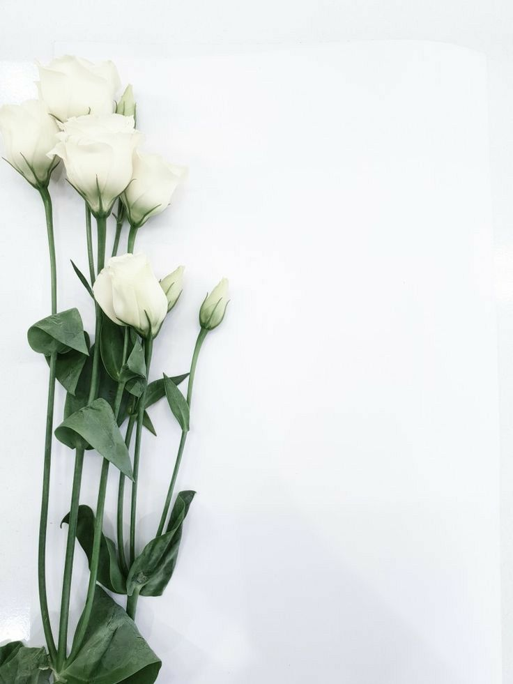 Free iPhone 11 Wallpaper: Flower Wallpapers Collection - IMG 6922