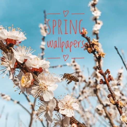 Free Spring Wallpaper Collection: Spring Flowers Wallpaper for iPhone - spring wallpaper 490x490