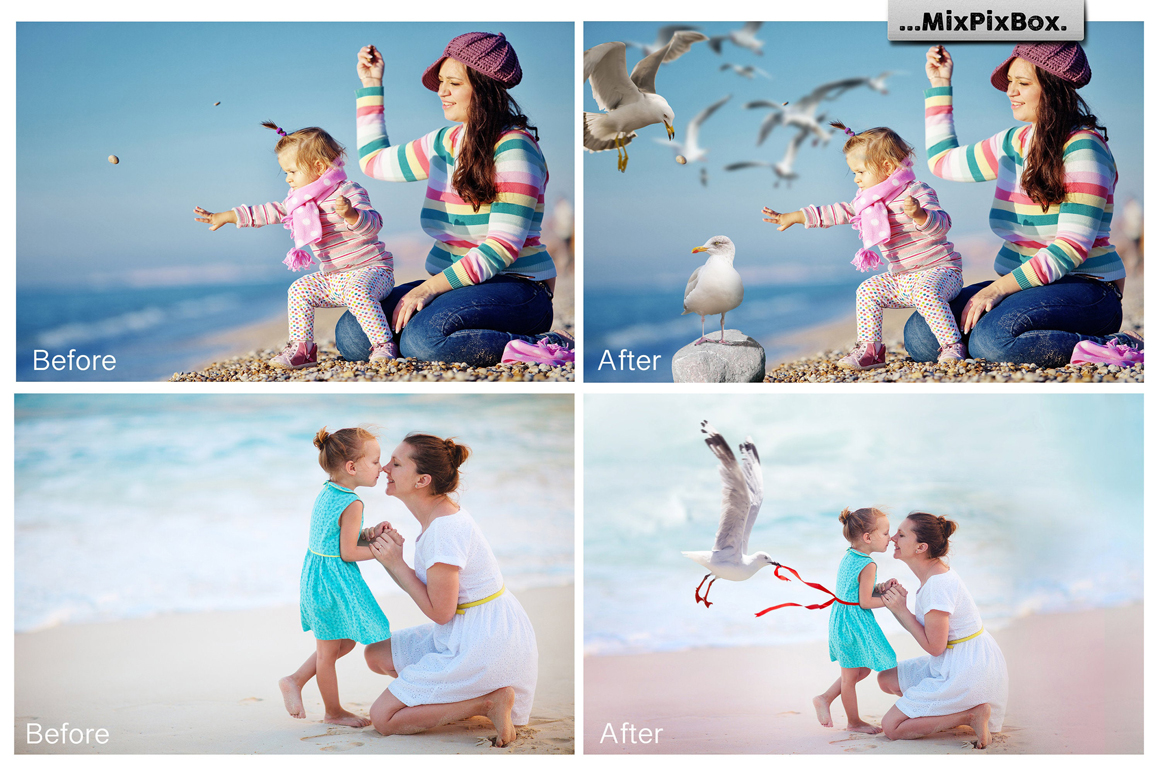 31 Seagull PNG Photo Overlays - 1 1