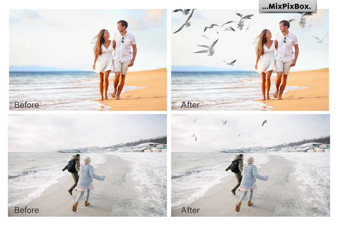 31 Seagull PNG Photo Overlays - 2 1
