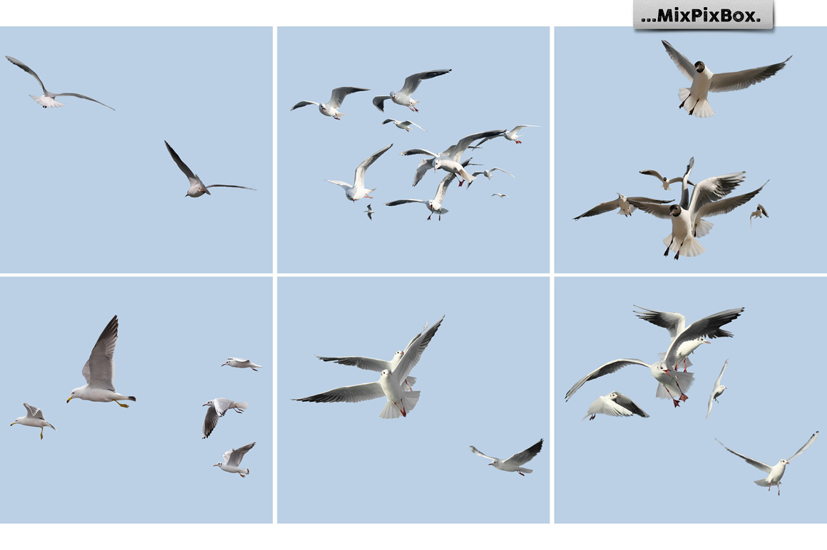 31 Seagull PNG Photo Overlays - 4 1