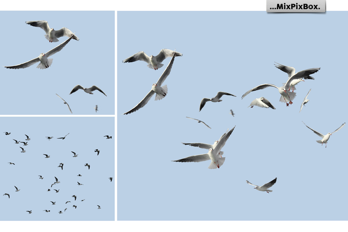 31 Seagull PNG Photo Overlays - 5 1
