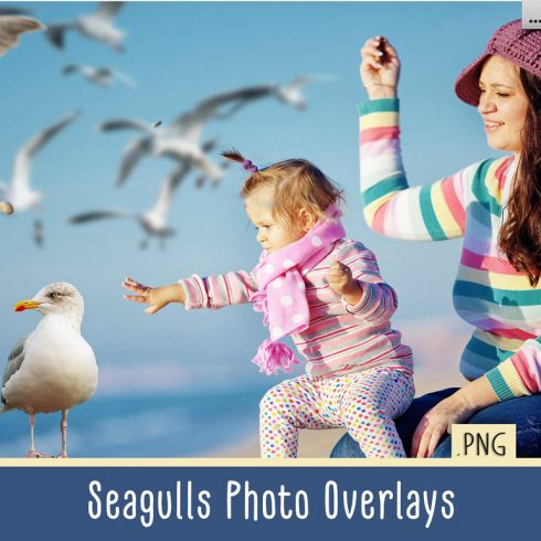 31 Seagull PNG Photo Overlays - 600 4 490x490