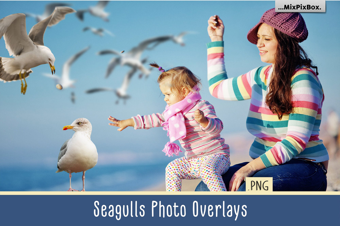 31 Seagull PNG Photo Overlays - seagulls first image