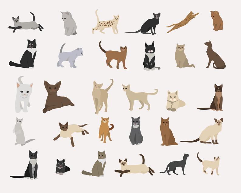 65 Cat Clipart Elements Digital PNG Vector - il 794xN.2608838778 sfbx