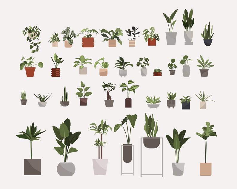 134 Botanical Clipart: Indoor Plants Clipart, Interior Clipart, Furniture Elements - il 794xN.2675043679 ukbx