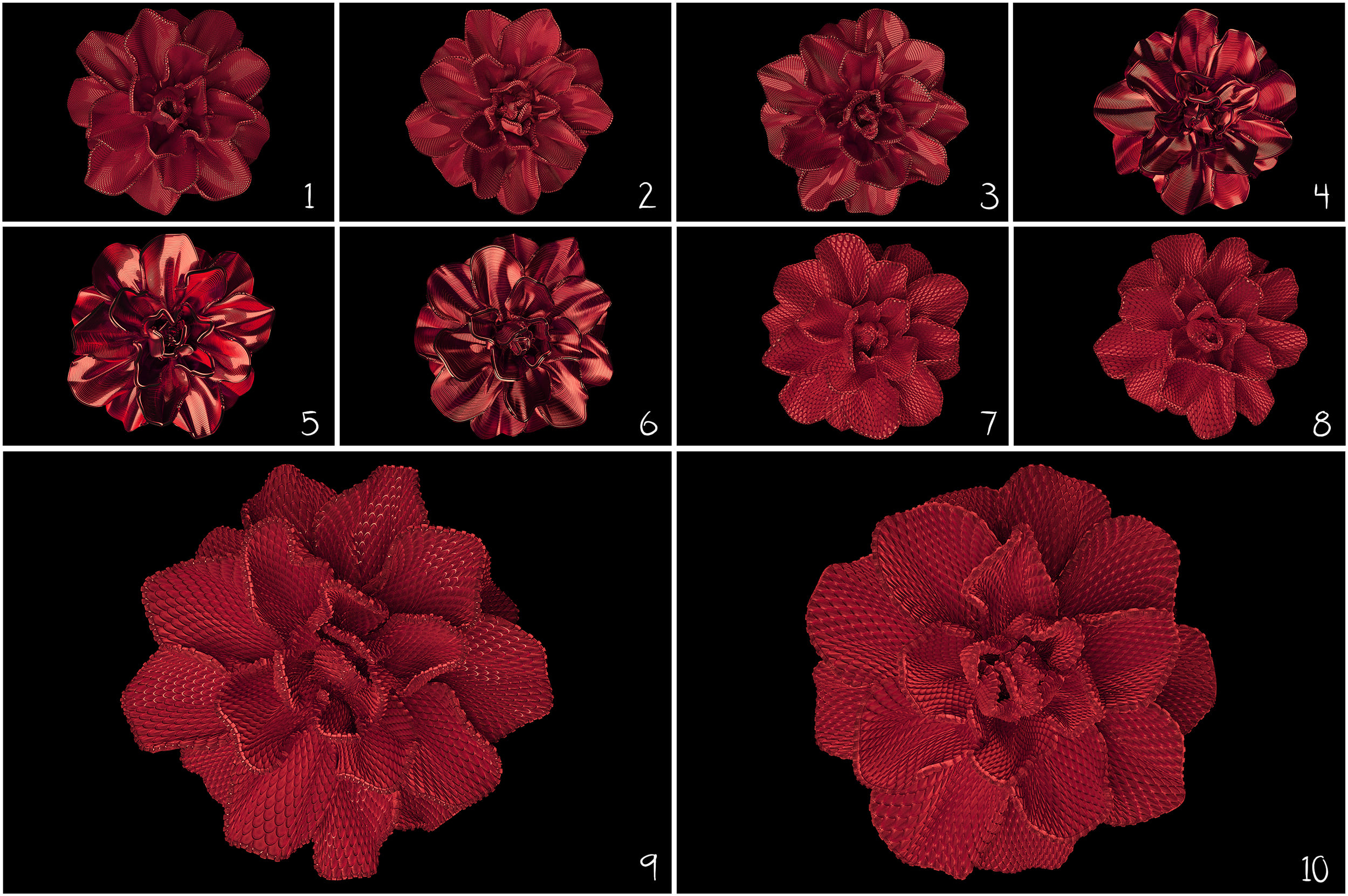100 Flower Overlays PNG: Red Magenta Flowers - 12a
