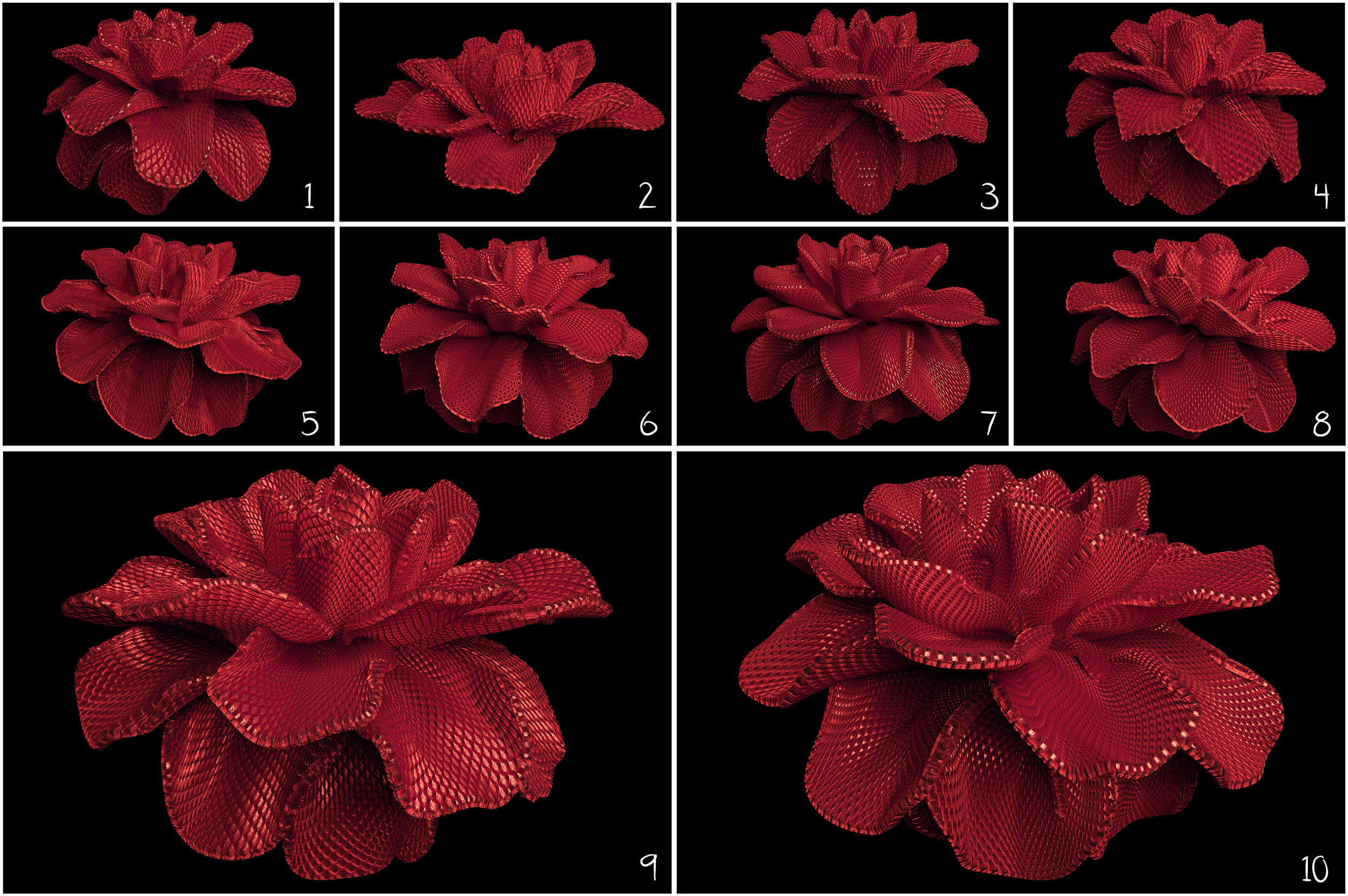 100 Flower Overlays PNG: Red Magenta Flowers - 12b