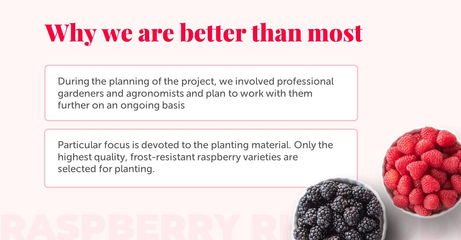 Feminine Presentation: Raspberry Powerpoint, Google Slides, Figma & Keynote Templates - Slide4