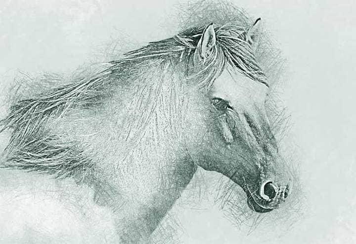 Horse Sketch Effect Photoshop.