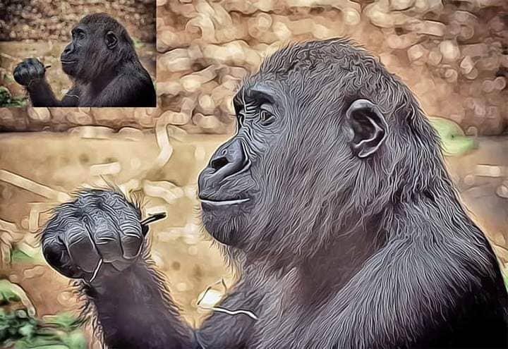 Orangutan The Oil Canvas Photoshop.