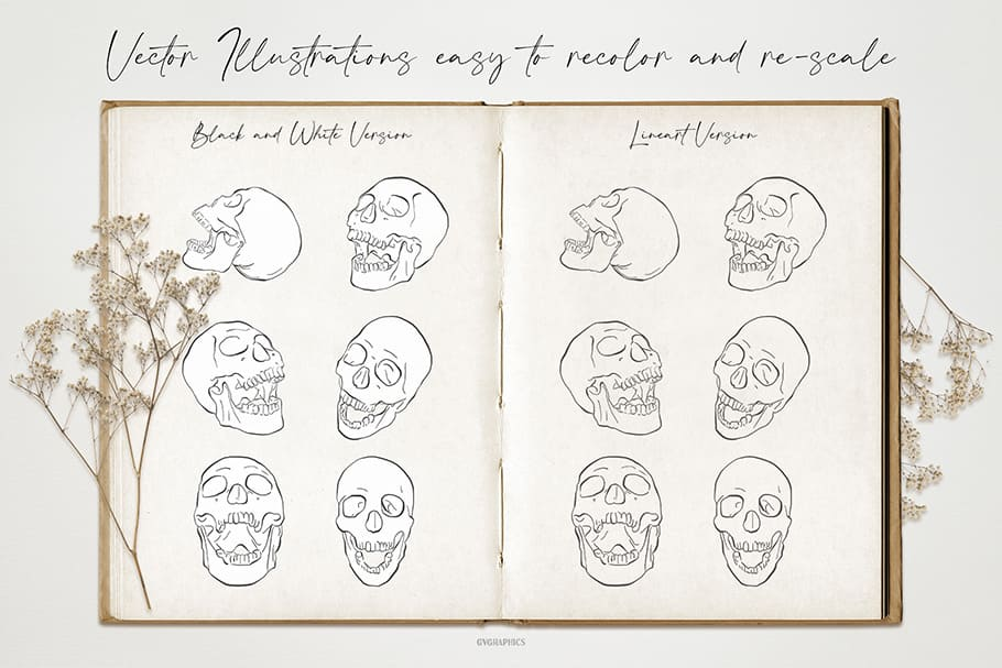 An expanded book in vintage style with skulls depicted.