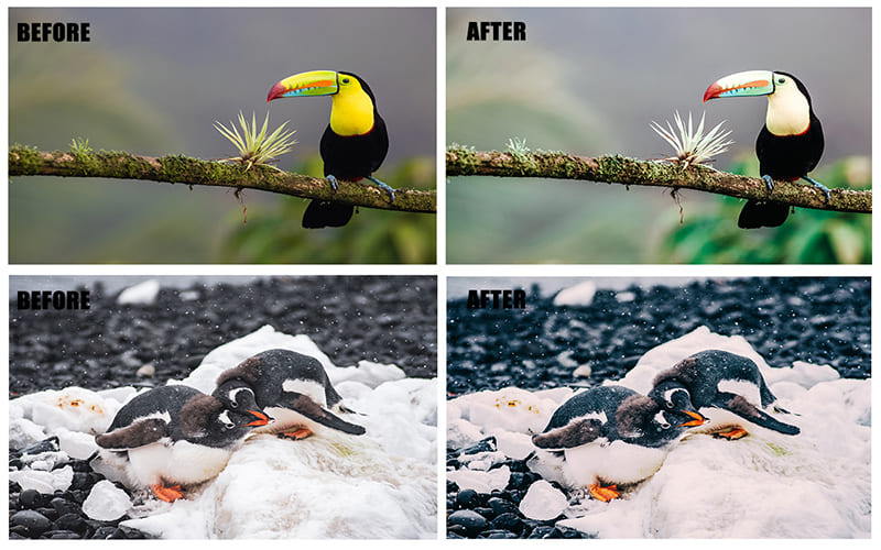 Pictures of animals with correct colors and soft light.