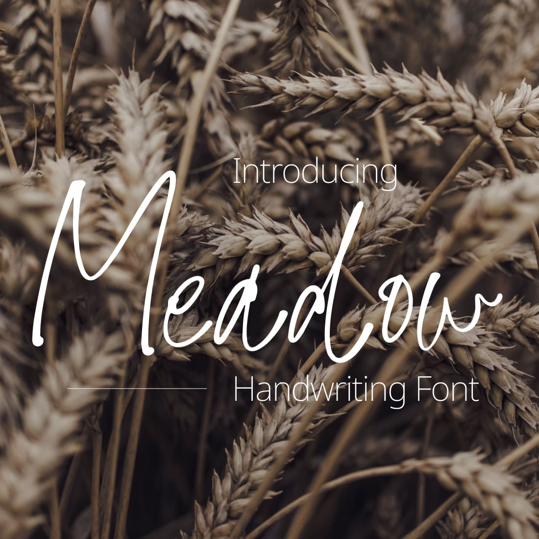 Meadow Handwriting Font Cover Collage Image by MasterBundles.