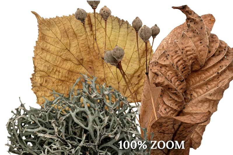 fall creator dry leaves zoom.