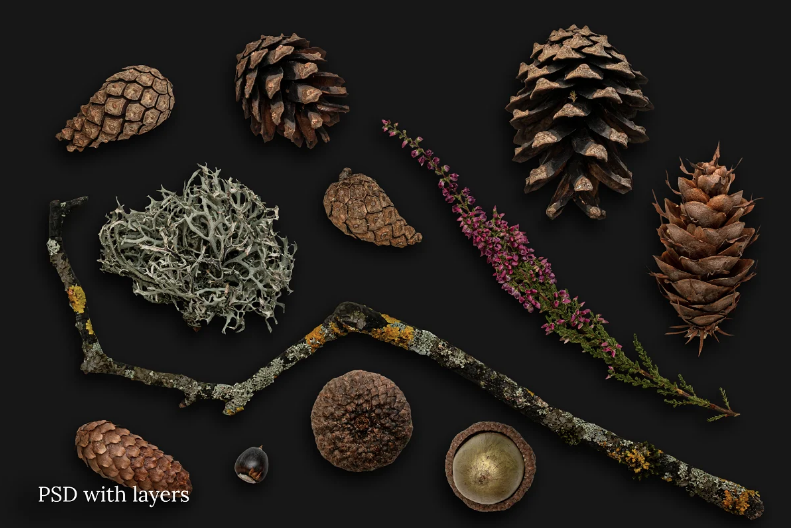 fall creator cones and sticks on the black background.