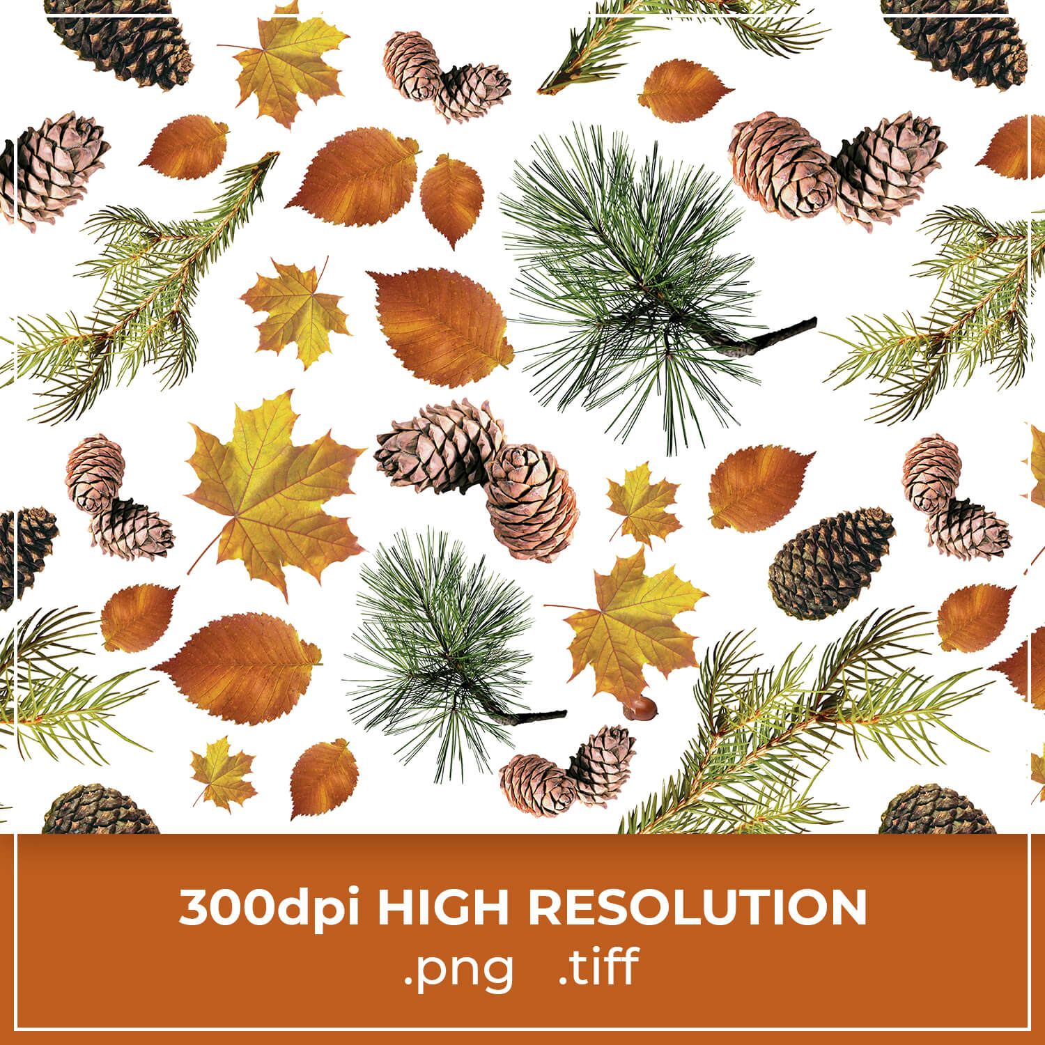 Leaves and Cones Autumn Pattern cover image.